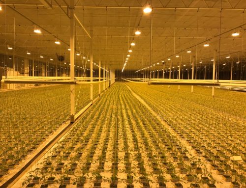 NXT-II 600w chez Arc'At Plants